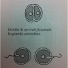 ¿Gemelos o mellizos? Diferencias