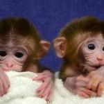 Mis mellizos, ¡Qué monos!