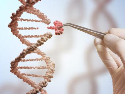 Tener mellizos está en tu genética